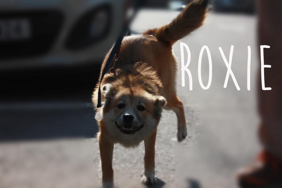 Roxie jpg